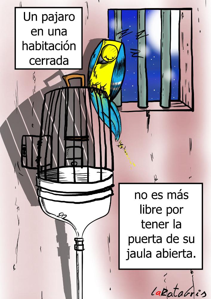 animales liberados